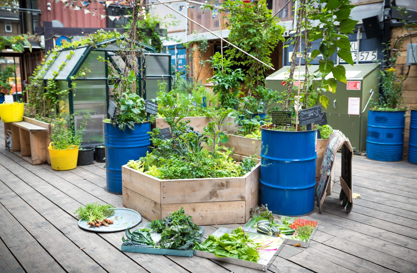 Фондация КОРЕН - Проект - Полезни ли са за здравето ядливи растения, гледани в градска среда?